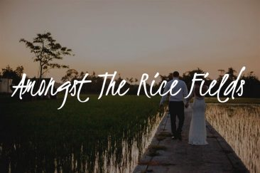 Amongst the Rice Fields